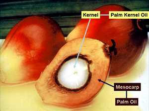 Global Palm Seed Oil Market