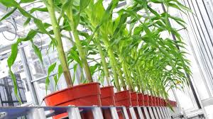 Global Plant Phenotyping Software Market