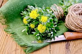 Global Rhodiola Extract Market