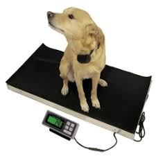 Global Veterinary Products for Companion Animals Market